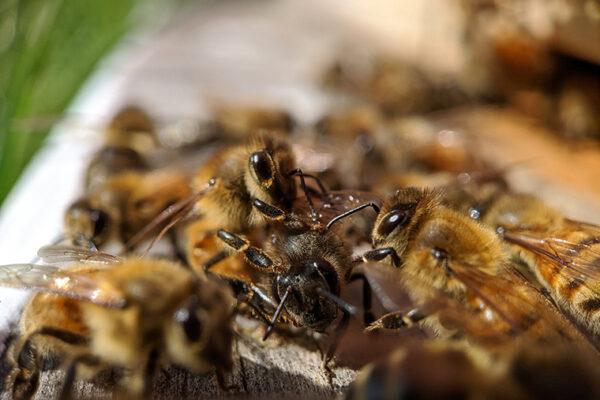 'Honey bee, it's me'