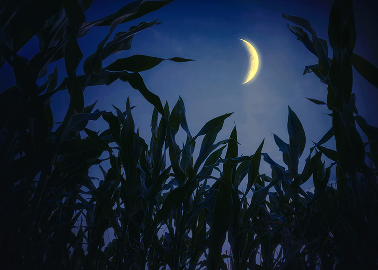 Corn and moon