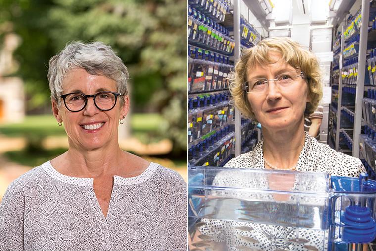 Allman, Solnica-Krezel receive faculty achievement awards