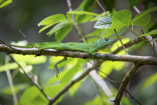 Sticky toes unlock life in the trees