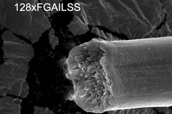 Microbially produced fibers: stronger than steel, tougher than Kevlar