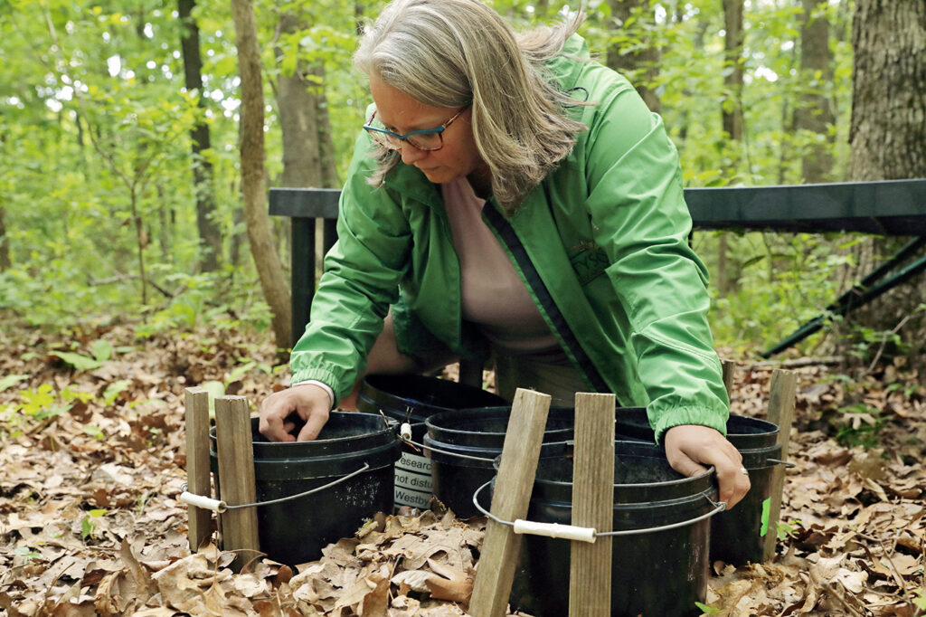 Kim Medley, Director at Tyson Research Center, checking her mosquitoes