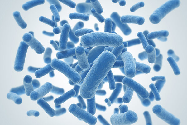 Bacteria could learn to predict the future