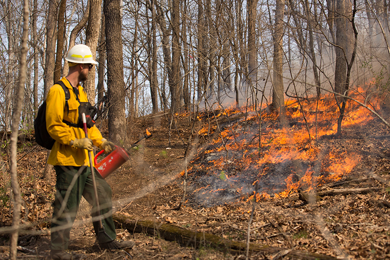Researchers study fire, biodiversity in the Ozarks