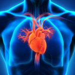 Research suggests new contributor to heart disease