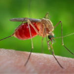 Memory loss caused by West Nile virus explained