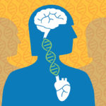 Cardiovascular disease, Alzheimer's genetically linked